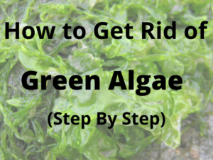 how to get rid of green algae in steam iron